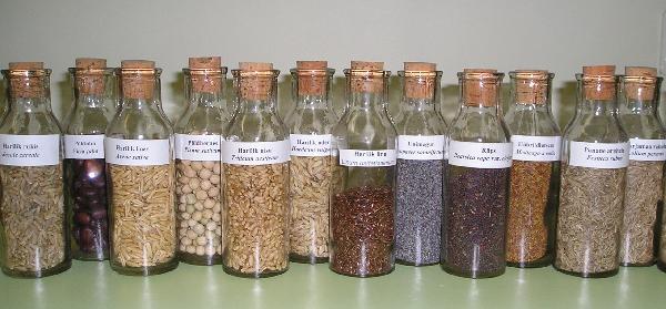 Seemned. Foto: Jõgeva Sordiaretuse Instituut