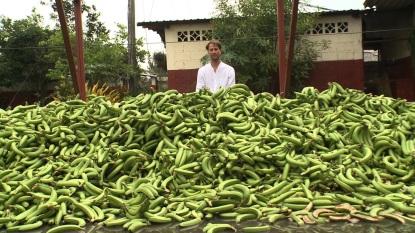 Ühe Ecuadori istanduse ühe päeva koristuse väljapraak. Autor: Tristram Stuart, toiduraiskamise vastane aktivist http://www.tristramstuart.co.uk/