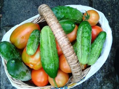 """""""Kui kasvatada ise toitu kasvõi natukene, vähendab see väga palju raiskamist ja ära jäävad ka need pikad suure ökoloogilise jalajäljega ahelad."""" - Toomas Trapido. Foto: Karin Volmer"""