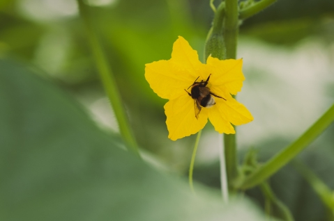 Kes mesilastest hoolib, kasutab taimekaitsevahendit ainult märgistusel toodud kultuuridel ja lubatud kulunormide piires. Foto: K. Press
