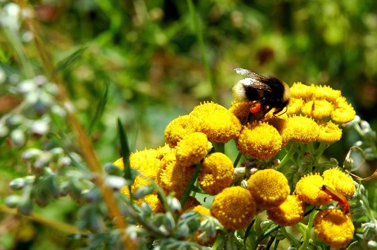 mesilane-oiel-allikas-pollumajandusministeerium
